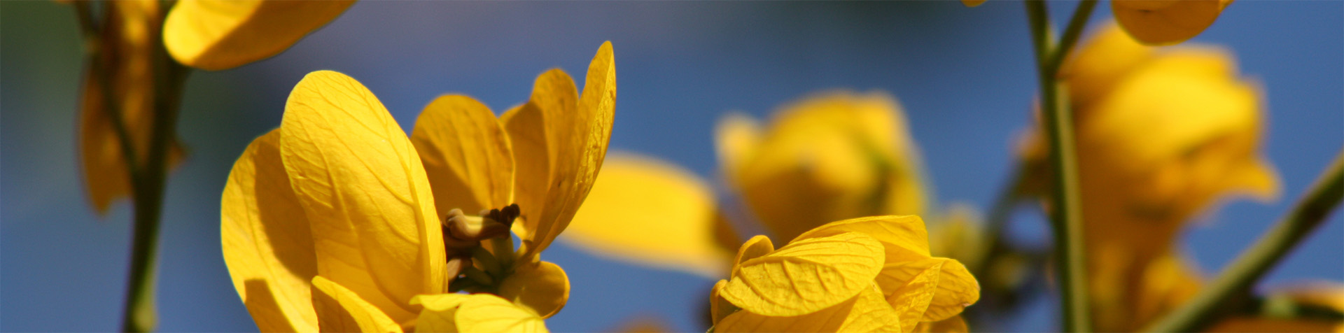slide-flor-amarilla