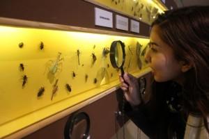 Descubre la diversidad de Insectos