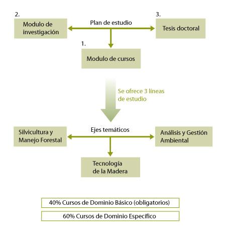 Organización del plan de estudio